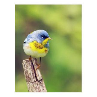 Cartão bonito da foto do pássaro da toutinegra de