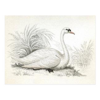 Cartão bonito da ilustração da cisne do vintage