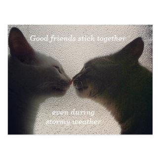 Cartão bonito do amigo do gato