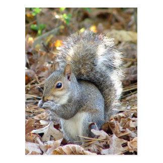 Cartão bonito do esquilo