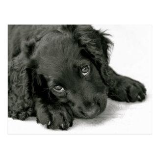 Cartão bonito do filhote de cachorro