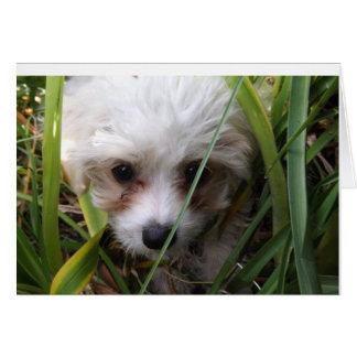 Cartão bonito do filhote de cachorro de Cavachon