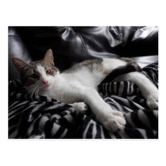 Cartão bonito do gato da mistura de Mau do egípcio