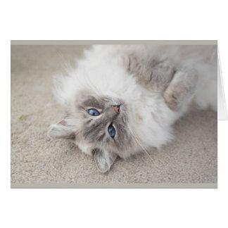 Cartão bonito do gato de Ragdoll