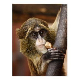Cartão bonito do macaco