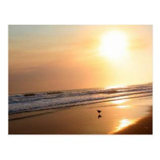 Cartão bonito do por do sol do oceano de