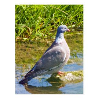 Cartão bonito do retrato da foto do pássaro do pom cartão postal