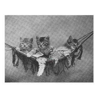 Cartão bonito dos gatinhos