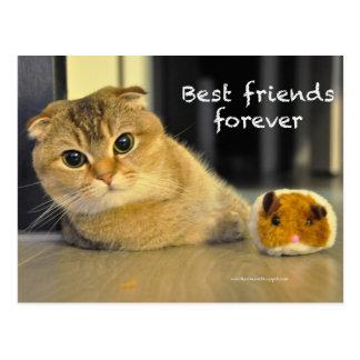 Cartão bonito dos melhores amigos do gato dos