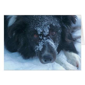 Cartão bonito enfrentado nevado do cão de border