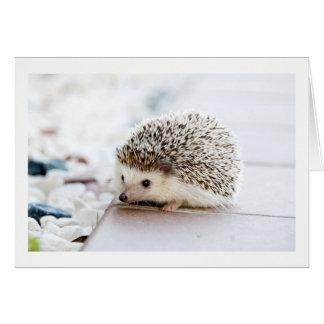 Cartão bonito vazio do ouriço