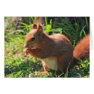 Cartão bonito vermelho do vazio da foto do esquilo