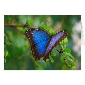 Cartão Borboleta azul de Morpho