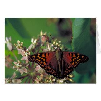 Cartão Borboleta de imperador Tawny no Milkweed comum