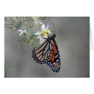 Cartão Borboleta de monarca