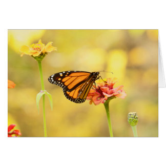 Cartão Borboleta de monarca no Zinnia