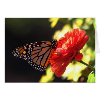 Cartão Borboleta de monarca no Zinnia vermelho