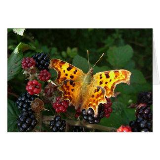 Cartão borboleta de vírgula em amoras-pretas