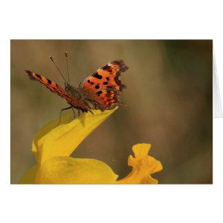 Cartão Borboleta e Daffodil de vírgula