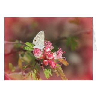 Cartão Borboleta minúscula na flor cor-de-rosa