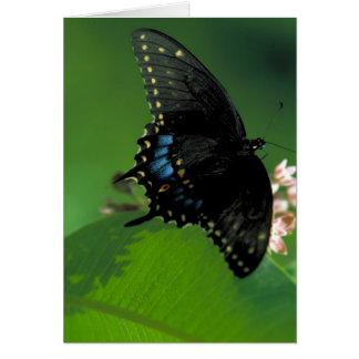 Cartão Borboleta preta de SwallowTail na flor