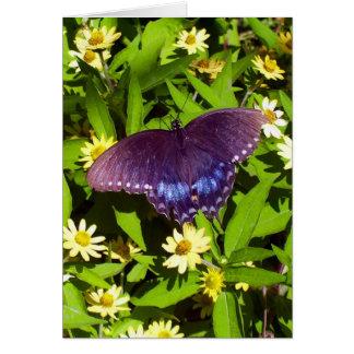 Cartão Borboleta preta em flores