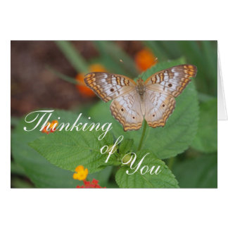Cartão Borboleta que pensa de você