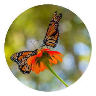 Cartão Borboletas de monarca em Wildflowers