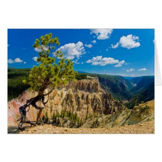 Cartão Borda da garganta de Yellowstone