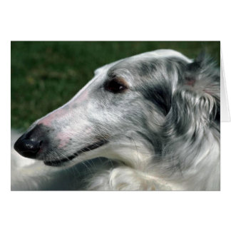 Cartão Borzoi, Wolfhound do russo