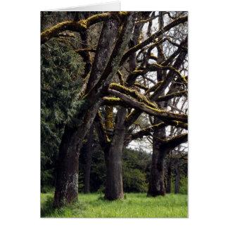Cartão Bosque do carvalho