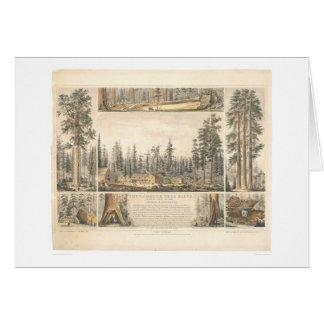 Cartão Bosque gigantesco da árvore (0976A)