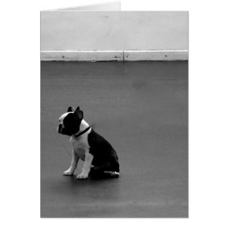 Cartão Boston Terrier DRU 2