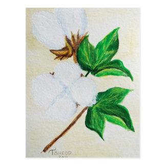 cartão botânico da cápsula do algodão