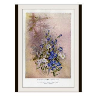 Cartão botânico franjado do Wildflower da genciana