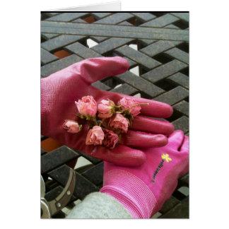 Cartão Botões do rosa do rosa