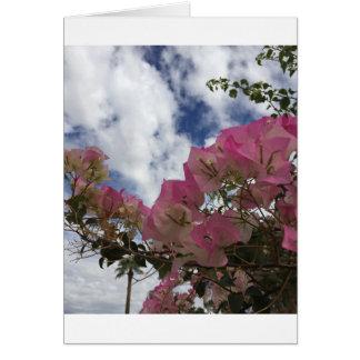Cartão Bougainvillea cor-de-rosa