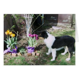 Cartão Braedyn cheira as flores