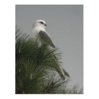 cartão Branco-atado do papagaio