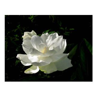 Cartão branco da flor do Gardenia