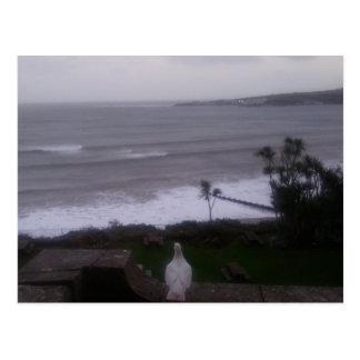 Cartão branco da foto da opinião do mar do pombo