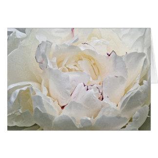 Cartão branco da fotografia do vazio da peônia