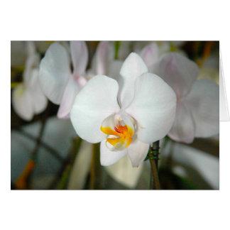 Cartão branco da orquídea de traça
