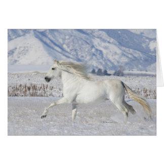 Cartão branco do cavalo do garanhão da neve