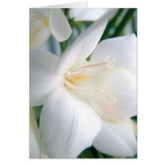Cartão Branco | do Freesia |