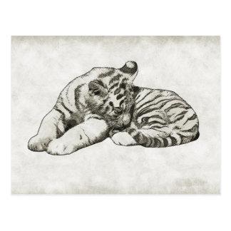 cartão branco do gato de tigre do sono do bebê