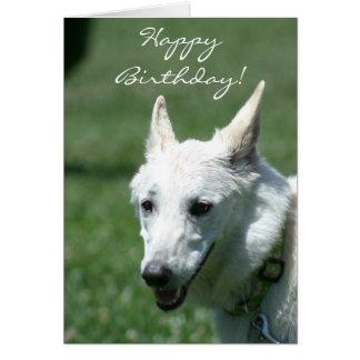 Cartão branco do german shepherd do feliz