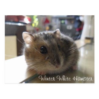 Cartão branco do hamster do inverno
