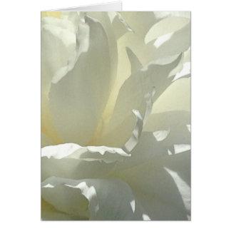 Cartão branco do vazio da flor da peônia