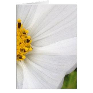 Cartão branco do vazio do close up da flor do